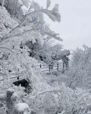 花台醉美雪景