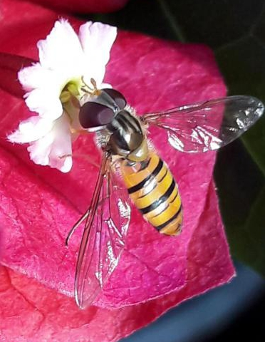 花兒、蟲兒歡樂頌秋美