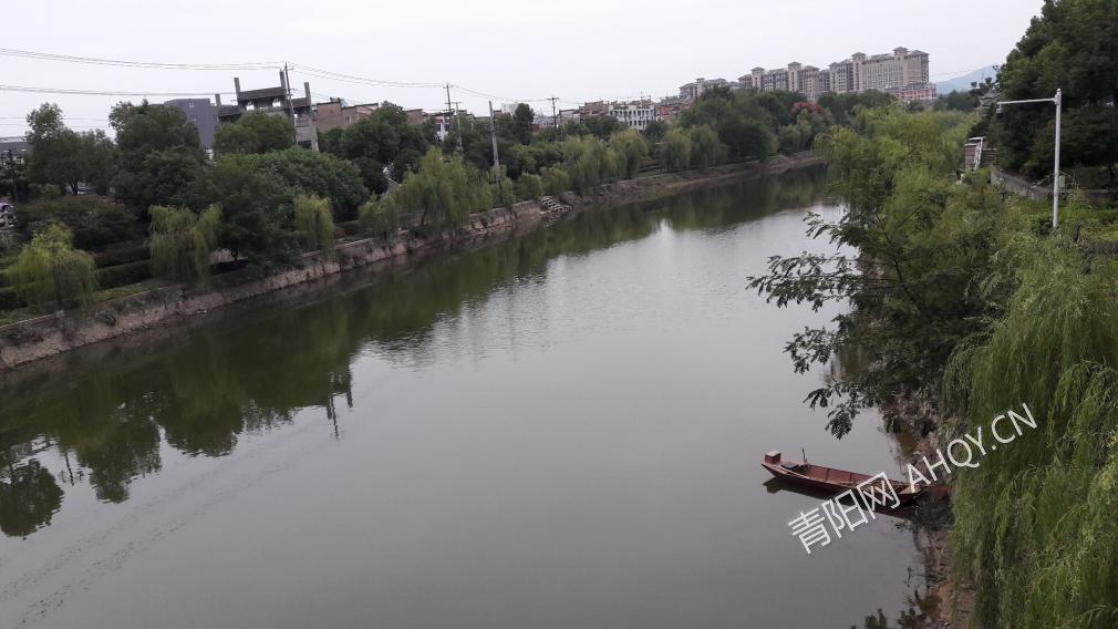 青通河岸杨柳迎风飘,船儿静静的停靠在岸边.jpg