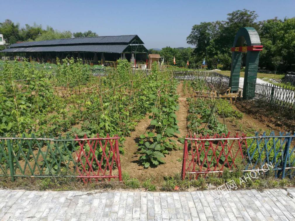 菜园.jpg